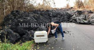 Волонтеры спасают собак после извержения вулкана