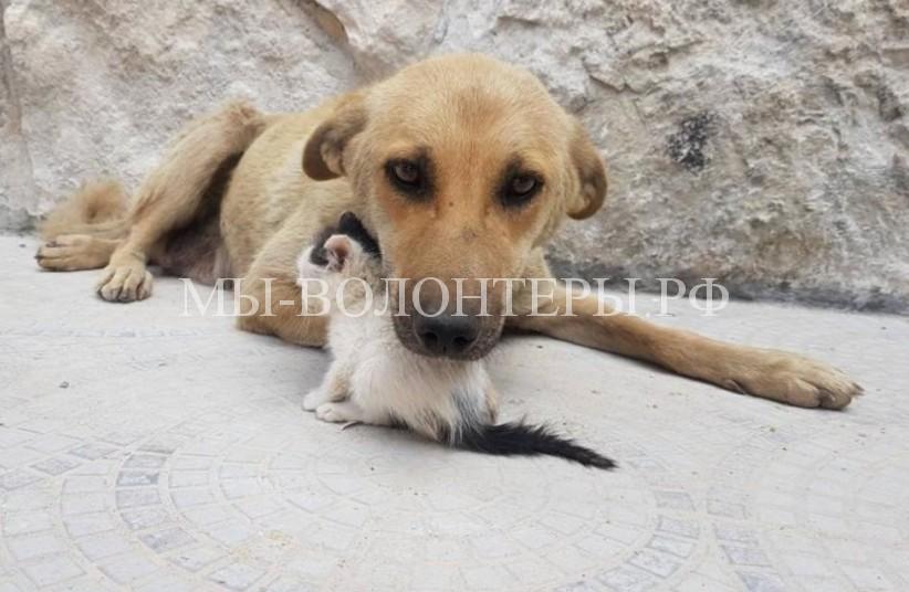 В Алеппо собака, спасенная из зоны боевых действий, усыновила бездомного котенка