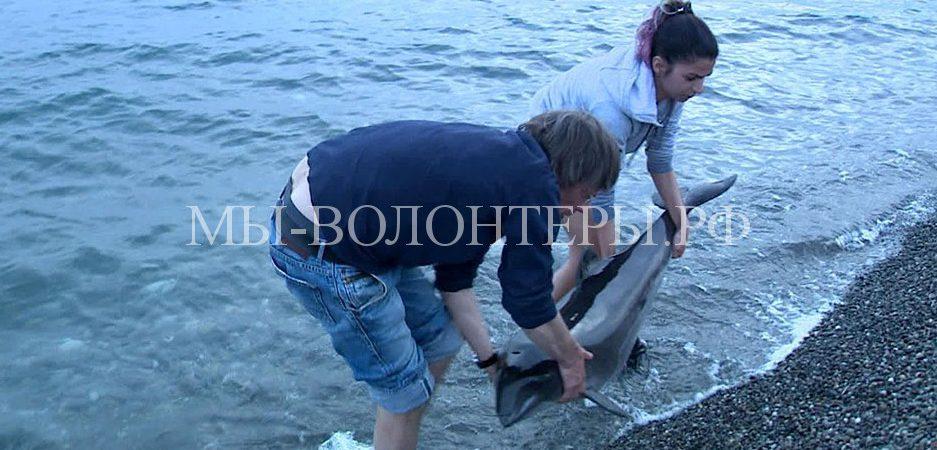 В Сочи волонтеров учат помогать дельфинам, попавшим в беду