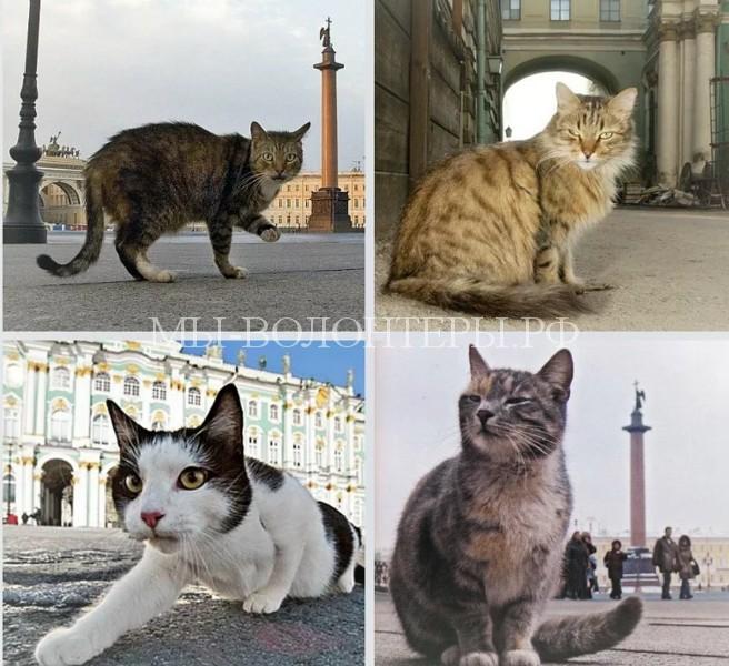 В Санкт-Петербурге прошел традиционный «День эрмитажного кота»