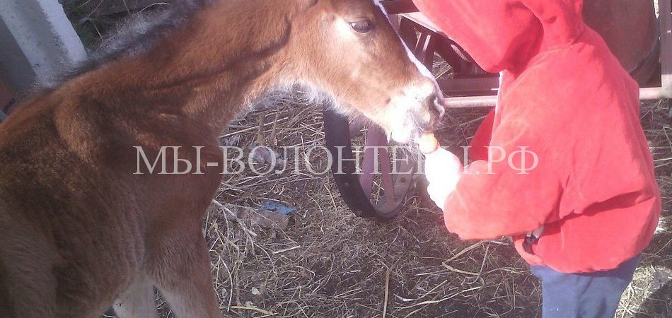 Жители Кургана всем городом помогают выхаживать осиротевшего новорожденного жеребенка