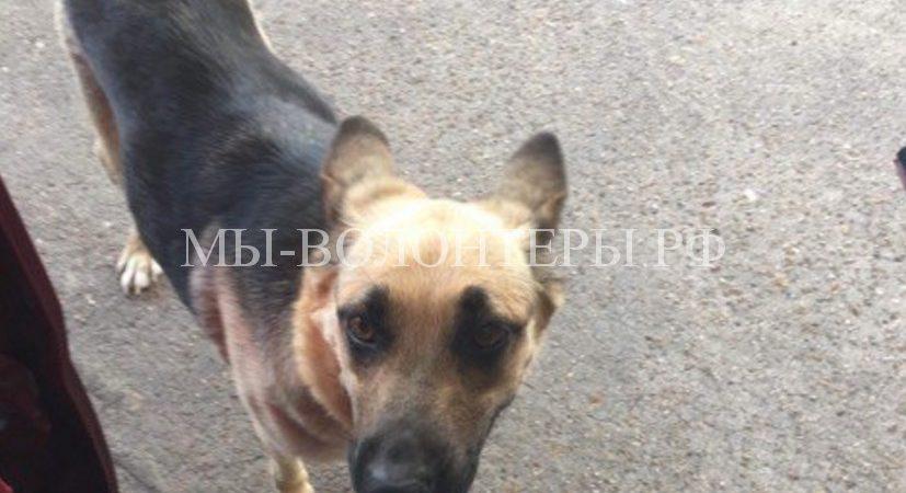 Брошенная на заправке собака буквально умоляла проезжающих людей помочь ей