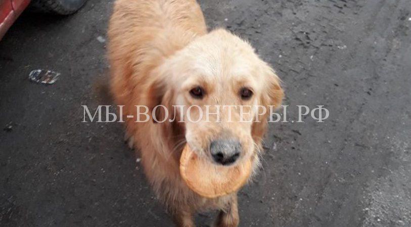 Как случайный фотокадр изменил судьбу бездомной собаки