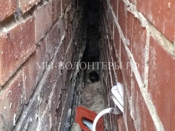 Спасение котят, застрявших в щели между домами