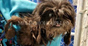 Как спасли и выходили брошенную ослепшую собаку