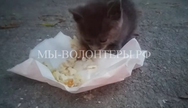 Британская туристка, отдыхая в Греции, спасла бездомного котенка с помойки и забрала его домой