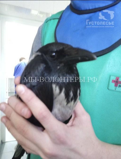 В Новосибирске открыли приют для птиц, попавших в беду
