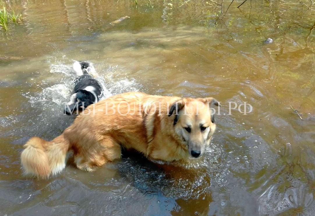 Наши подопечные Рыжий и Дуся на прогулке - водные процедуры