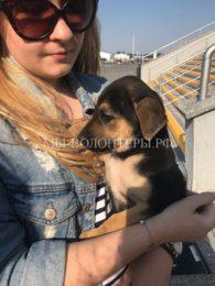 В Ростове-на-Дону волонтеры объявили неожиданную акцию в преддверии ЧМ-2018