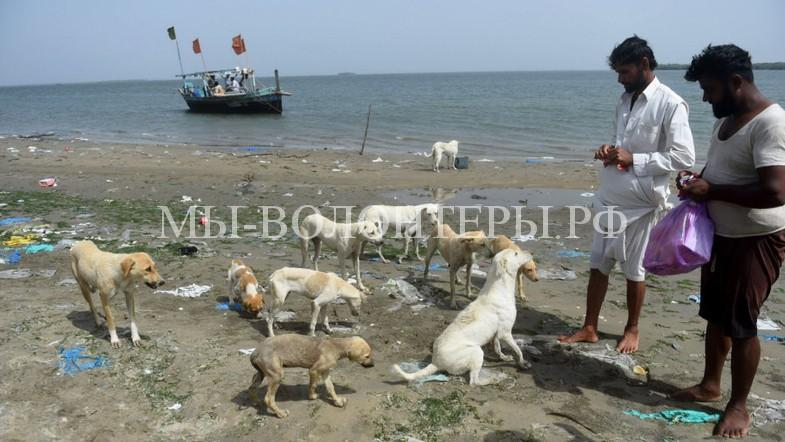 На островах Аравийского моря рыбаки спасают от голода бездомных собак