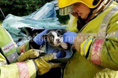 Спасение щенка из машины, попавшей в ДТП