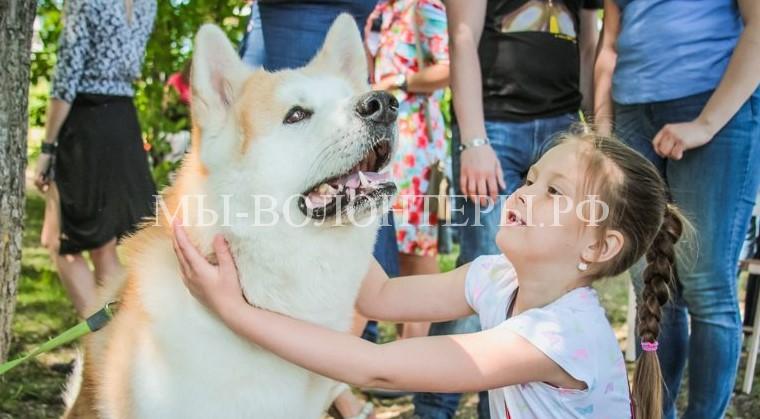 Ежегодная благотворительная акция «Собака-обнимака»