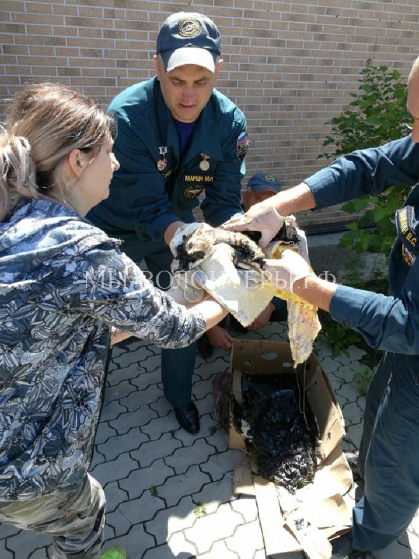 Жители Находки спасали котят, увязших в гудроне