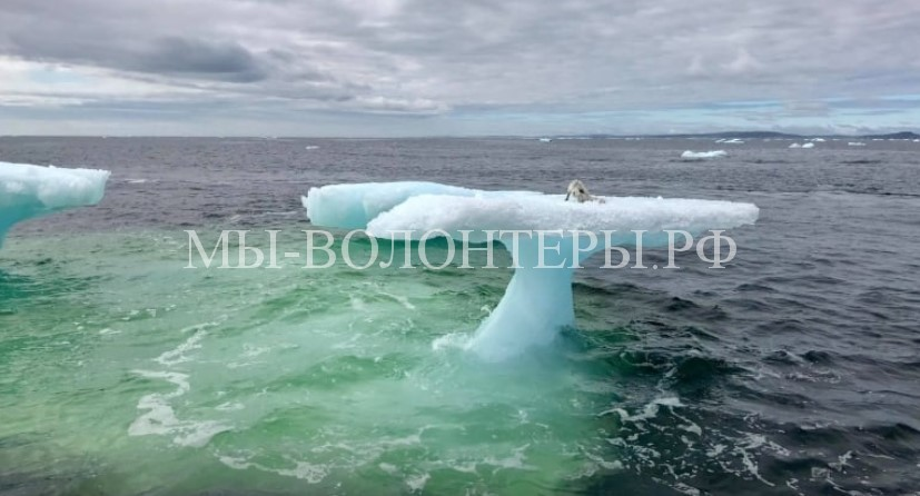 Спасение полярной лисы из ледяной ловушки