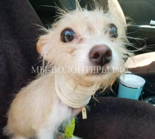 Волонтеры спасли собаку, которую хозяева привязали в ванной и уехали