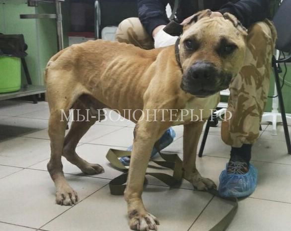 В Перми бригада «скорой помощи» спасла собаку, привязанную к дереву