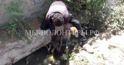 Спасение тонущей собаки со сломанной лапой