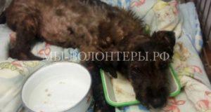 Спасатели вытащили щенка из застывающего битума