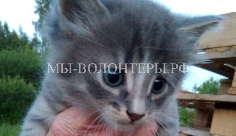 Котенок (мальчик), 1.5 месяца, привит, ИЩЕТ ДОМ !
