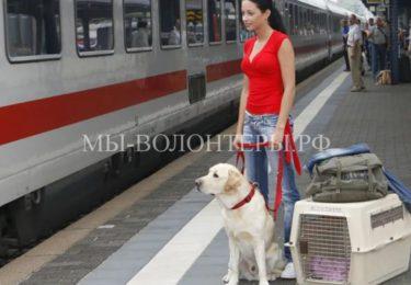 Пилотный проект РЖД — животные смогут самостоятельно ездить в поездах