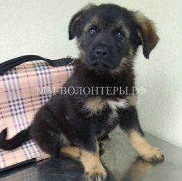 Привет из дома от щенка по имени Рашик (от волонтера приюта Щербинка)