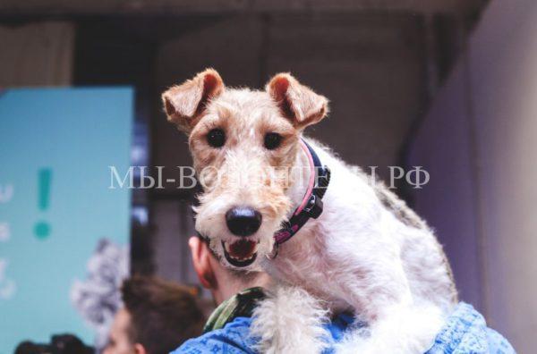 2 июня впервые в Москве пройдет фестиваль для всей семьи «Petshop Days»