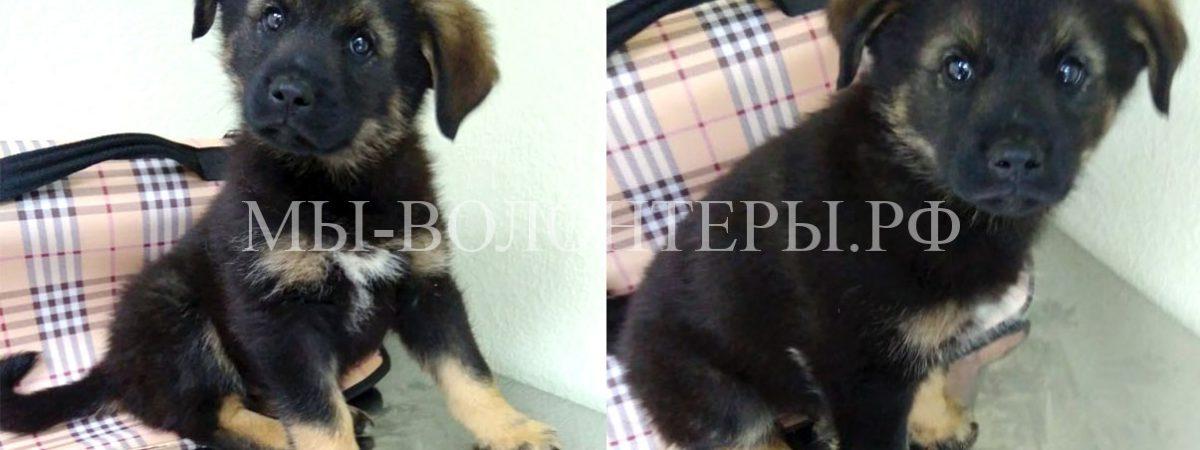 2 щенка — мальчики (братишки), 2.5 мес, прививки сделаны, ИЩУТ ДОМ !