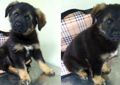 2 щенка-братика, 2.5 месяца, ищут дом