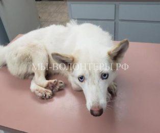 Спасение собаки с искривленными лапами, она всю жизнь просидела в клетке