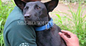 Зоозащитники в Индии спасли 36 собак, которых везли в мешках на бойню