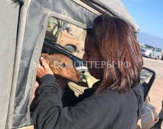Поиски и спасение таксы, сбежавшей из вывалившейся переноски при погрузке авиабагажа