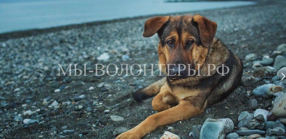 До конца 2018 в Крыму стерилизуют 7,5 тыс бездомных животных