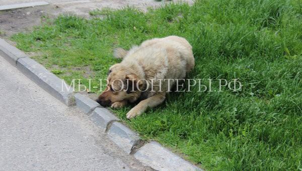 В Подмосковье ввели штрафы за незаконное усыпление бездомных животных