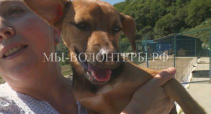 Футбольный болельщик из Перу спас на ЧМ в Сочи бездомную собаку и решил забрать её домой