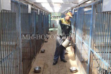 Осужденных за неуплату алиментов направляют на исправительные работы в приюты для бездомных животных