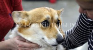 2 июля – Международный день собак