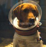 «Отряд космических дворняг» - годовщина полета первых собак-космонавтов