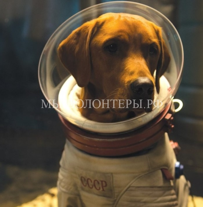 «Отряд космических дворняг» — годовщина полета первых собак-космонавтов