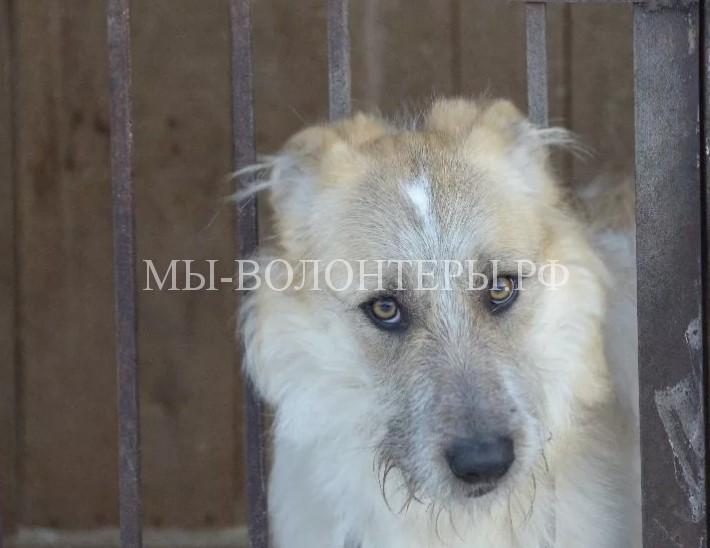 Приют для бездомных животных построят в поселении Кленовское (ТиНАО)