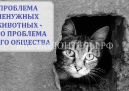 Осенью в Госдуме рассмотрят законопроект обофициальном введении системы ОСВВ
