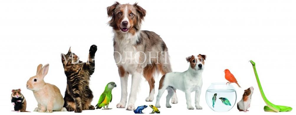 Регистрация домашних животных должна быть обязательной, но бесплатной