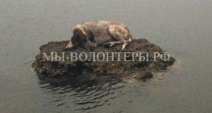 Собака спасалась от пожаров на камне в море