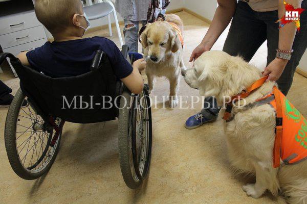 Собаки-терапевты посетили детей в больнице