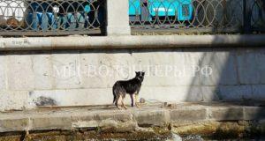 Собаку, упавшую в Москву-реку спасли на юге столицы