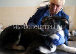 В Москве откроются центры оказания бесплатной неотложной помощи бездомным животным