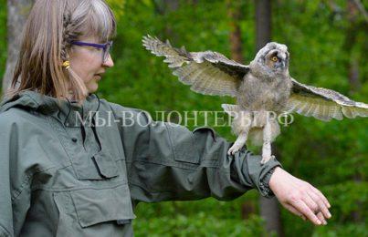 В Брянской области открыли Центр реабилитации диких птиц