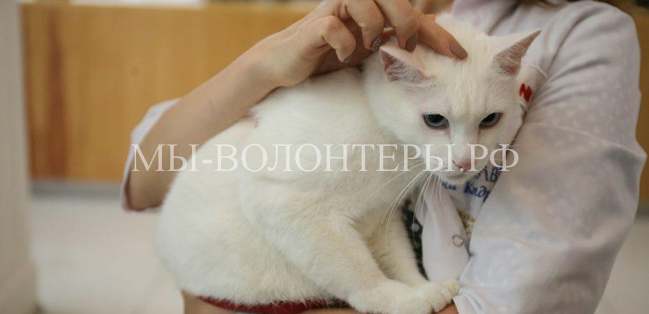 Эрмитажный кот Ахилл обрел семью