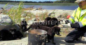 Спасение семерых щенков с каменного необитаемого островка