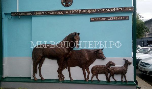 В Иркутске открыли памятный барельеф, посвященный ветеринарным врачам