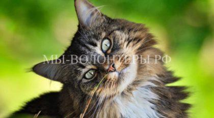 8 августа — Международный День кошек
